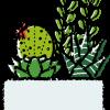 多肉植物寄せ植えイラスト無料素材