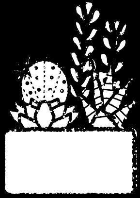 多肉植物寄せ植えイラスト白黒
