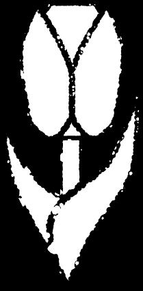 チューリップイラスト白黒