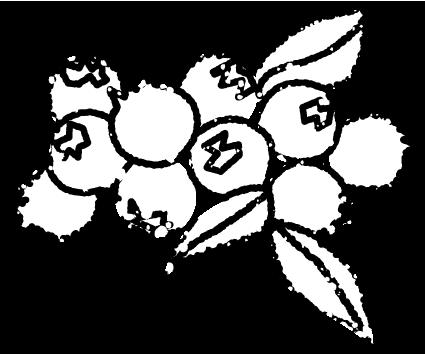かわいいブルーベリーイラスト無料素材白黒