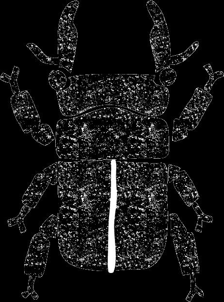 クワガタイラスト白黒無料