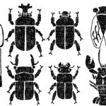 夏の虫イラスト白黒無料素材