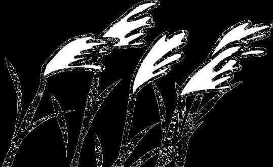 かわいいススキイラスト白黒無料素材