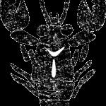 ザリガニイラスト白黒無料素材