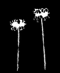 かわいい彼岸花イラスト無料素材白黒