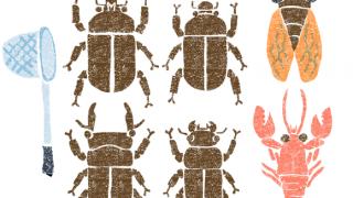 かわいい夏の虫イラスト無料素材