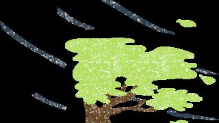 強風の木のイラスト無料素材