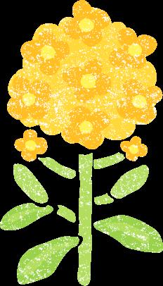 菜の花イラスト無料素材